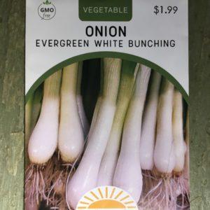 Onion Evergreen White Bunching
