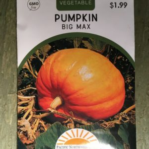 Pumpkin Big Max