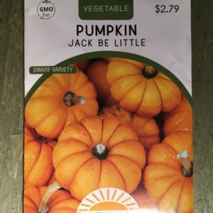 Pumpkin Jack Be Little