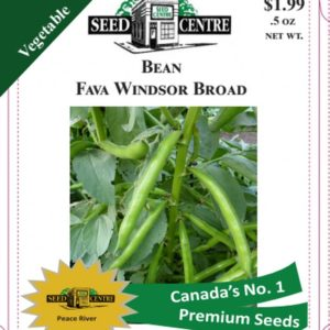 Bean - Fava Windsor Broad