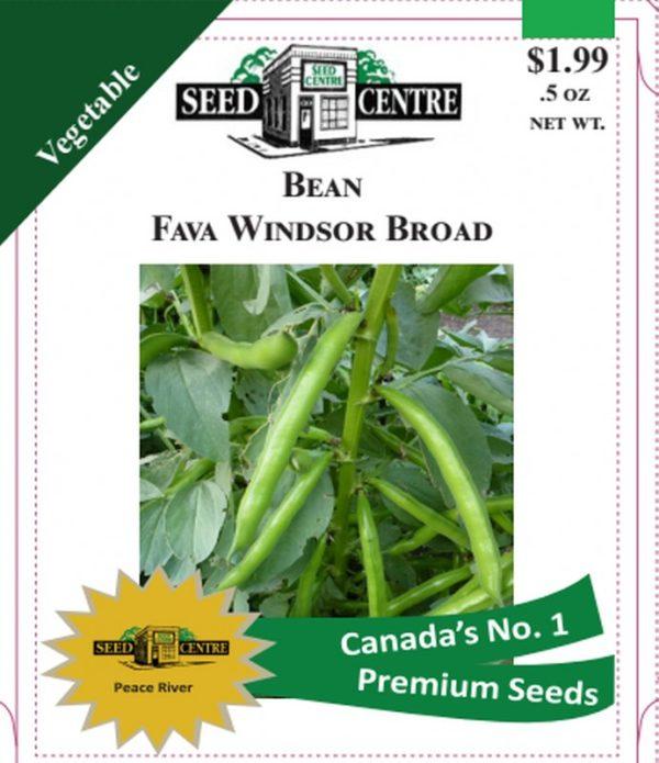 Bean - Fava Windsor Broad