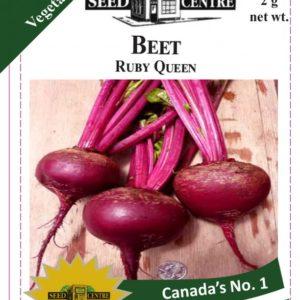 Beet - Ruby Queen