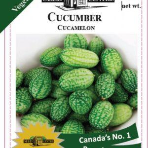 Cucumber - Cucamelon