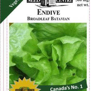 Endive - Broadleaf Batavian