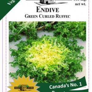 Endive - Green curled Ruffec