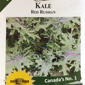 Kale - Red Russian