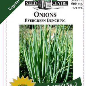 Onion - Evergreen Bunching