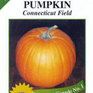 Pumpkin - Connecticut Field