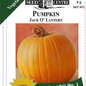 Pumpkin - Jack O Lantern