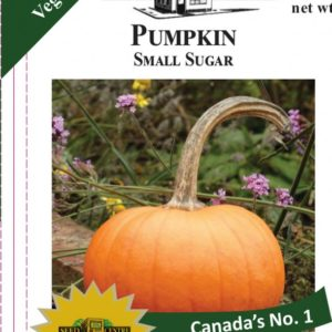 Pumpkin - Small Sugar