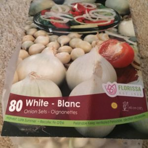 White Onion Sets