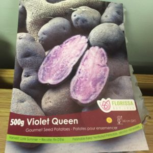 Violet Queen Seed Potatoes