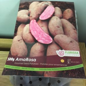 AmaRosa Seed Potatoes