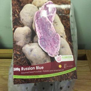 Russian Blue Seed Potatoes