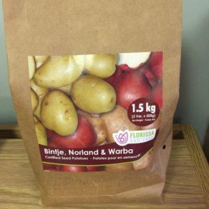 Seed Potatoes Variety Pack - Bintje, Norland & Warba
